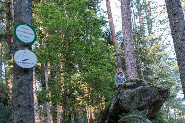 Le sentier recense notamment un rocher dit de la grenouille.