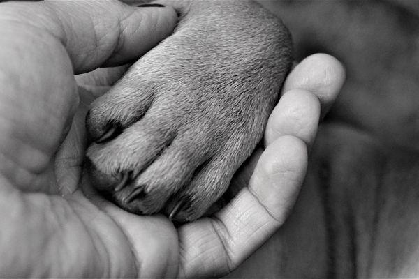 Disputandum : animaux et hommes, quelle cohabitation ?