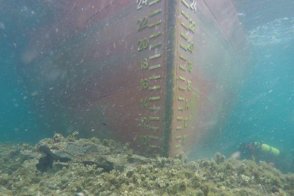 Cliché sous-marin du Rhodanus.