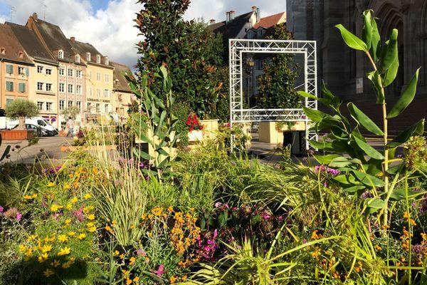 Le Jardin éphémère s'est installé en plein coeur de Mulhouse pour trois semaines, comme chaque année, à la fin de l'été.