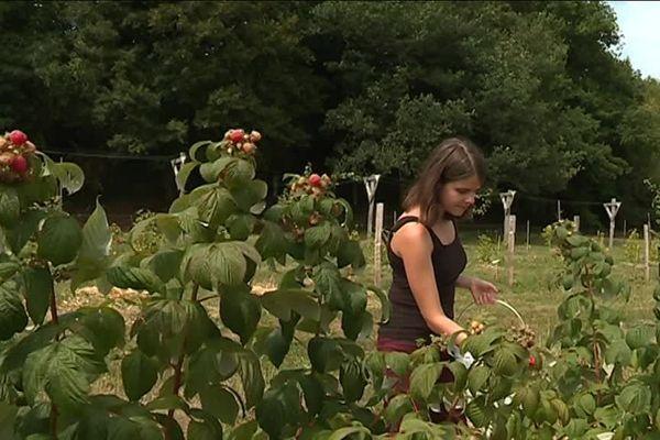 Anna, qui est horticultrice en Hongrie, est venue pratiquer le woofing en Bourgogne pour enrichir son expérience professionnelle