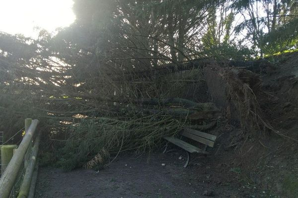 Un arbre tombé près des animaux de la Colline aux Oiseaux, à Caen