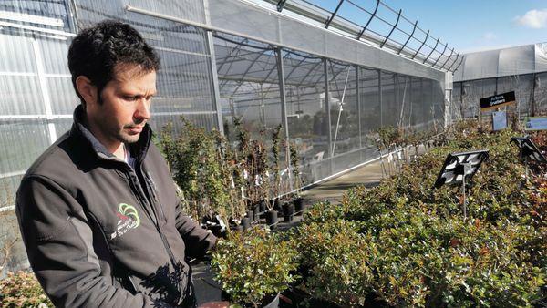 Les rosiers de François Beneteau sont en feuilles 10 à 15 jours en avance.