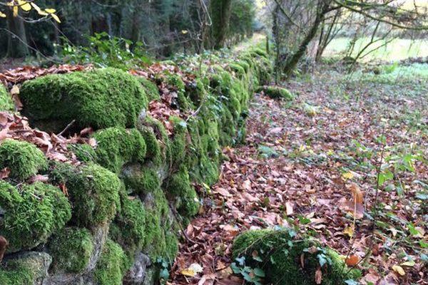 Patrimoine bâti en pierres sèches