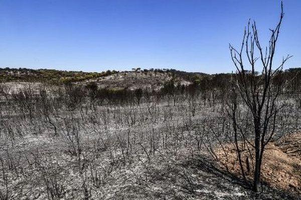 Au total à Générac, près de 800 hectares ont été détruits par le feu en quatre jours.