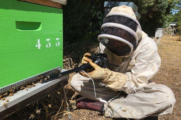 Filmer au plus près les abeilles pour mieux comprendre leur univers