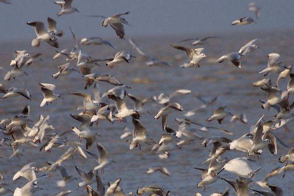 Vous pourrez observer des oiseaux migrateurs sur le lac de Serre-Ponçon le 10 mai.