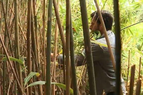 En huit mois d'exploitation, Patrice Billaud a vendu 10 000 pailles en bambou basque