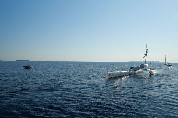 Dès le 1er jour de la mission, deux groupes de grands dauphins ont pu être observés dans le nord de Port-Cros.