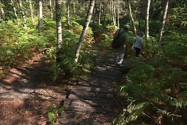 Les Gorges d'Apremont, au cœur de la forêt de Fontainebleau, est l'un des massifs les plus prisés en région parisienne.