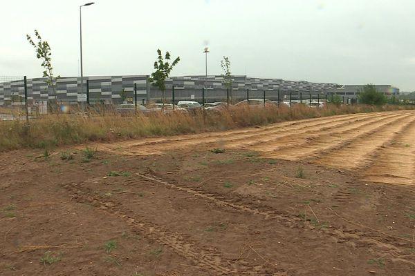 Une parcelle de lin cultivée à proximité d'une zone d'activité à Bourg-Achard (Eure)