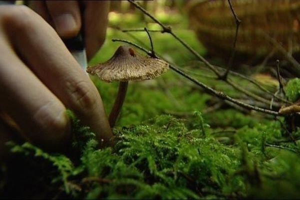 La saison des champignons est de septembre à octobre