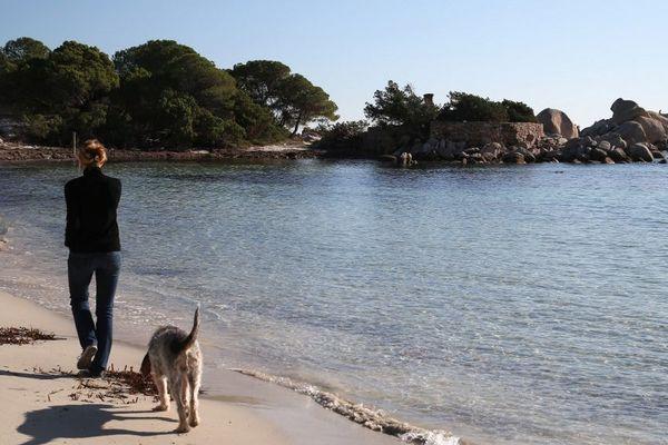 La Corse connaîtra-t-elle un semblant de saison touristique cette année ? Le rapport de suivi du plan de déconfinement de la Corse révèle déjà des chiffres préoccupants pour l'avant-saison.