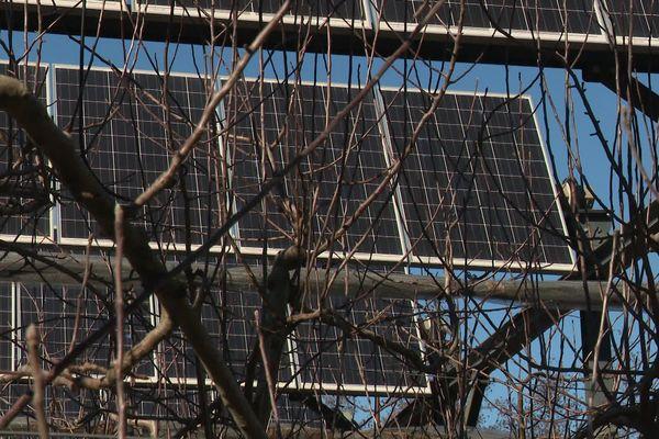 Station d'Expérimentation La Pugère : des panneaux solaires inclinables installés pour protéger les pommiers de la chaleur.