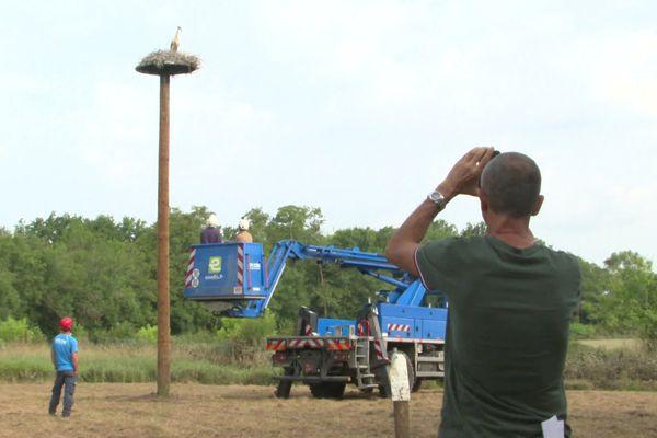 Pour déplacer les cigognes, une plateforme de métal a été installée par les équipes d'Enedis.