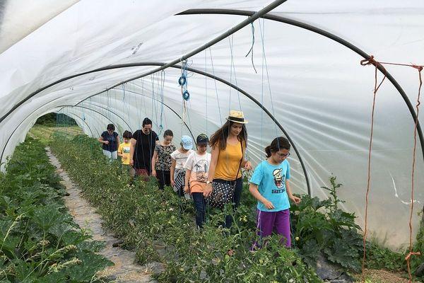 Des enfants découvrent l'agriculture bio dans une ferme