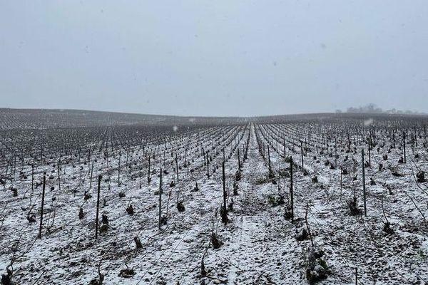 Les vignes enneigées d'Épernay.