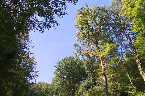C'est dans cette forêt de chênes que les 4 éoliennes seront érigées.
