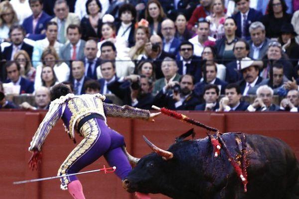 """Accroché en fin de série par le 5ème toro, El Juli souffre d'une cornada de 15 cm à la fesse droite. Pronostic """"grave"""" selon le bulletin médical"""