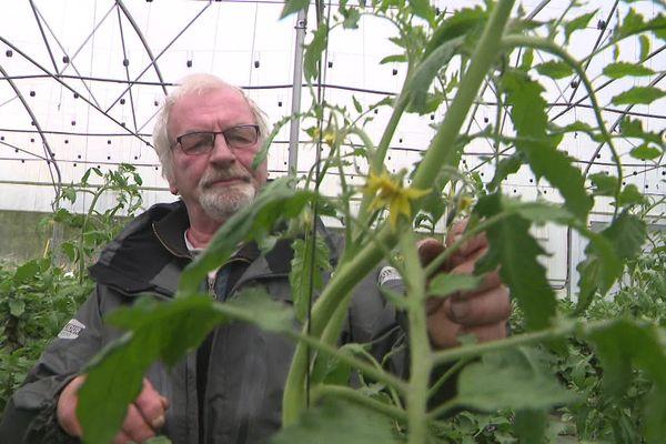 « La saison tomate commence avec beaucoup de retard au vu de la température et de l'humidité. Donc on aère au maximum, on fait ce qu'on peut. » Jean-Paul Dossi gère la récolte de ses plantes, mises à l'abri.