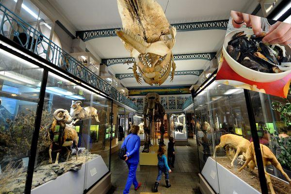 Vous pourrez immortaliser ce moment à table avec les animaux du musée.