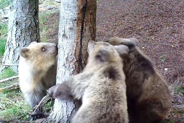Les trois oursons plein de vie