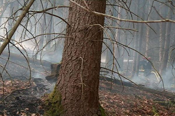 Les feux de forêts prennent d'autant plus vite par temps sec et fortes chaleurs