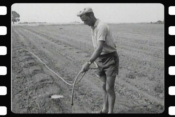 Sécheresse de 1976 : difficile pour les agriculteurs