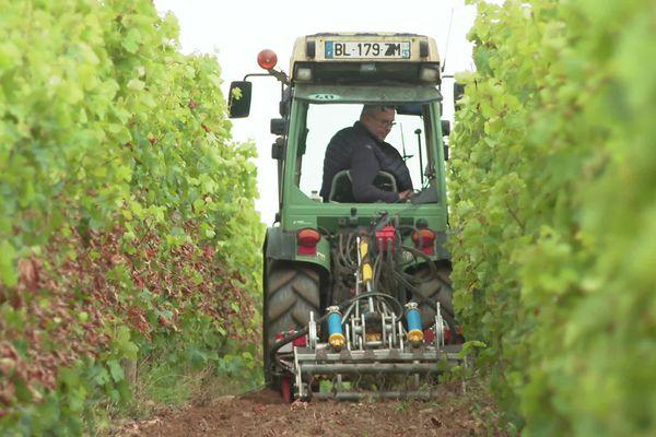 Les viticulteurs s'attendent à un rendement historiquement bas pour ces vendanges 2021.