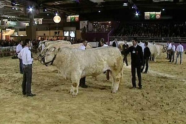 La Bourgogne s'est distinguée au concours général de la race charolaise dus Salon de l'agriculture 2013 à Paris