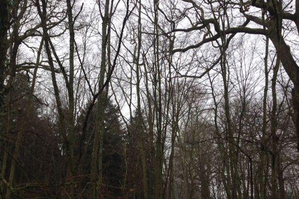 La région compte 940 000 hectares de forêt.
