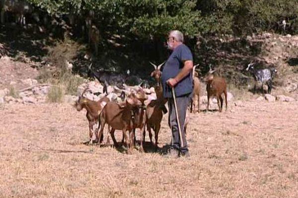 """Cet éleveur du Gard se dit """"inquiet de cette chaleur précoce""""."""