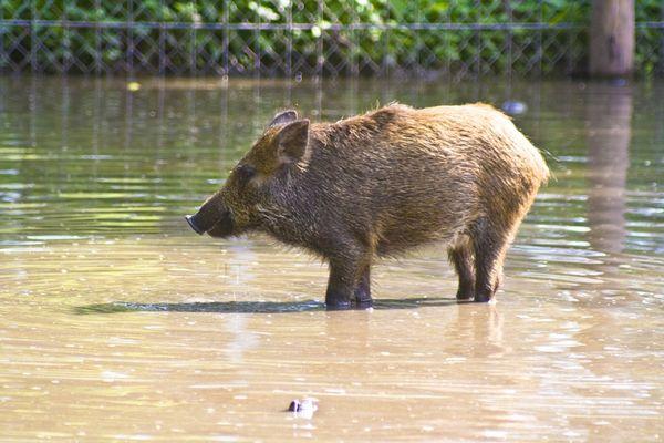 Un guide nature a pu observer 3 mammifères à l'heure du bain.  Photo d'illustration