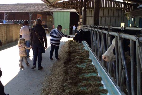 Les vaches dans la stabulation - Ferme de la Gâtinais - Coglès (35)