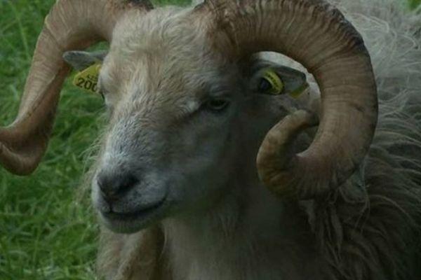 la fête du mouton à Catigny dans l'Oise