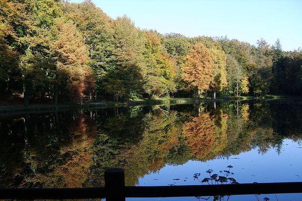 L'Orne en automne, dans la forêt de Bellême, quand le pourtour de l'étang de la Herse reflète ses couleurs miroitées.