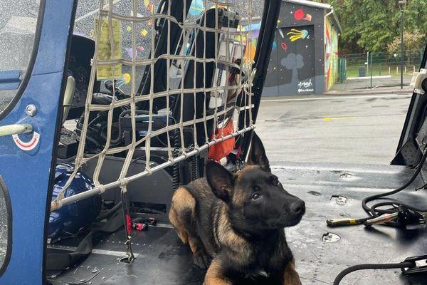 Sniper, chien de la gendarmerie, se familiarise avec l'hélicoptère