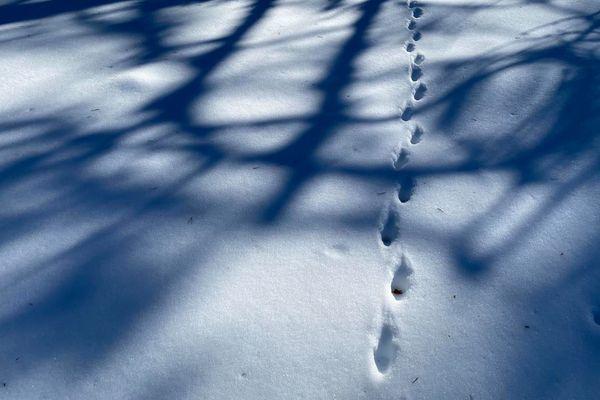 """""""Chaque mouvement ou chaque déplacement est une grosse énergie pour l'animal.Si le skieur ou le randonneur passe trop proche de lui, il va dépenser son peu d'énergie pour fuir et non pourvivre,"""" selon Emmanuel Gastaud, parc national du Mercantour."""