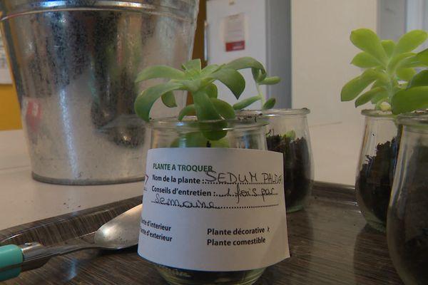 Tomates, plante grasse, le stand propose des plants de toutes sortes. Les usagers peuvent prendre ou déposer gratuitement.