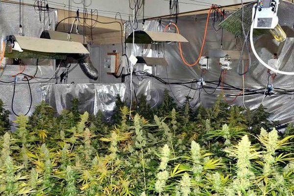 Nice Une Chambre De Culture De 108 Pieds De Cannabis Decouverte Quartier De L Ariane