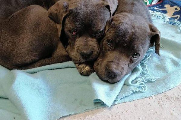 Rox et Roucky sont tous les deux sourds. L'un des deux chiots est aussi aveugle.