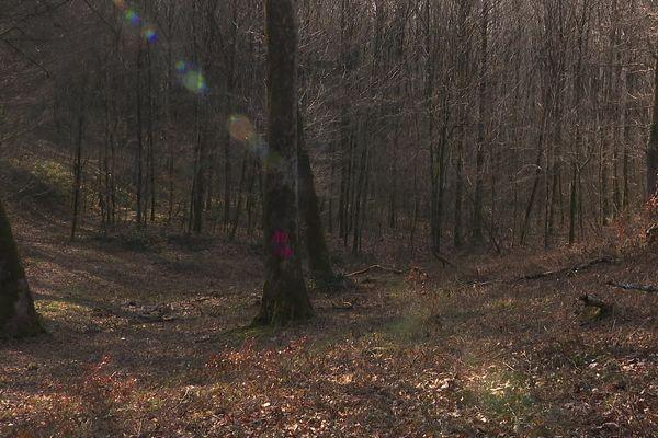 Dans la forêt de Grattery (Haute-Saône)