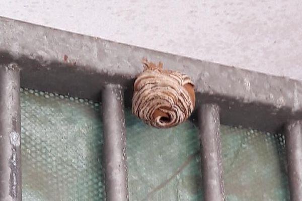 """En cette période, les nids """"primaires"""" n'ont pas encore atteint leur taille maximale."""