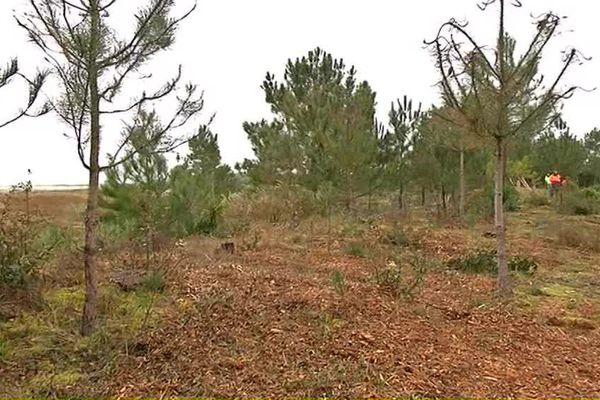 Les arbres, sur cette dune, se sont raréfiés
