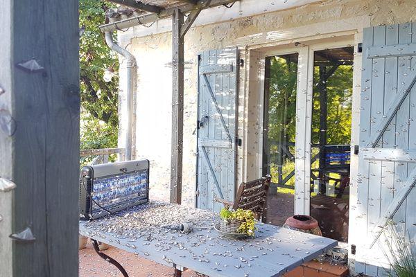 La maison de Florence Racine, dans le Lot, est prise d'assaut par les papillons de la pyrale du buis. Un cas courant selon un spécialiste.