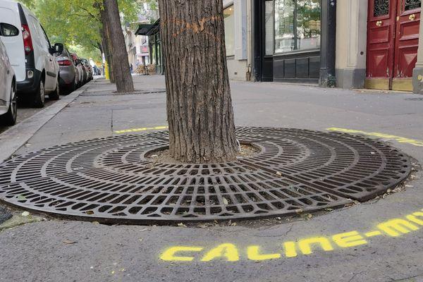 Un arbre « câliné » rue Brochant, à proximité du square des Batignolles.