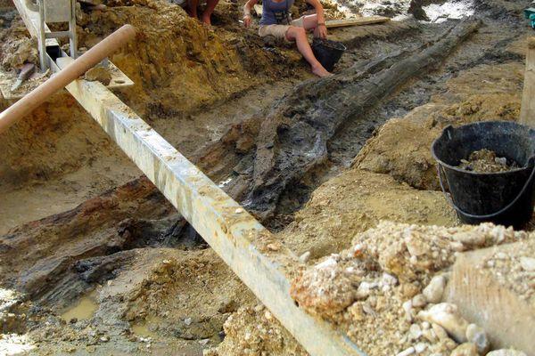 Découverte d'un arbre fossilisé de 130 millions d'années et de plus de 9 mètres de long sur le site d'Angeac-Charente en 2012.