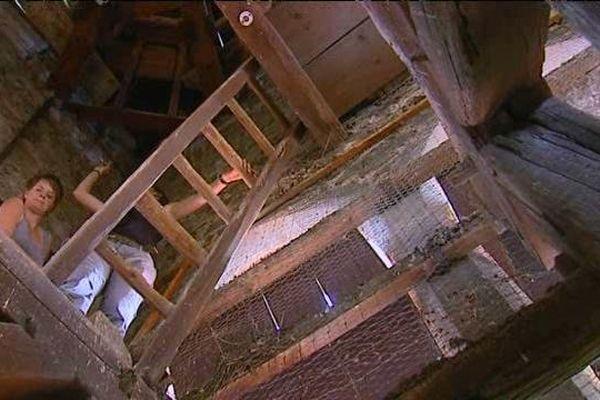A la recherche d'indice de la présence de chauves-souris... exploration dans le clocher de l'église de Brussieu.