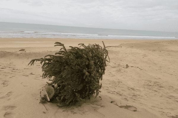 Non il ne faut pas se débarrasser de son sapin en forêt ou sur la dune !