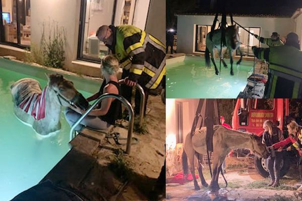 Le cheval était coincé dans la piscine avant l'intervention des sapeurs-pompiers des Bouches-du-Rhône.